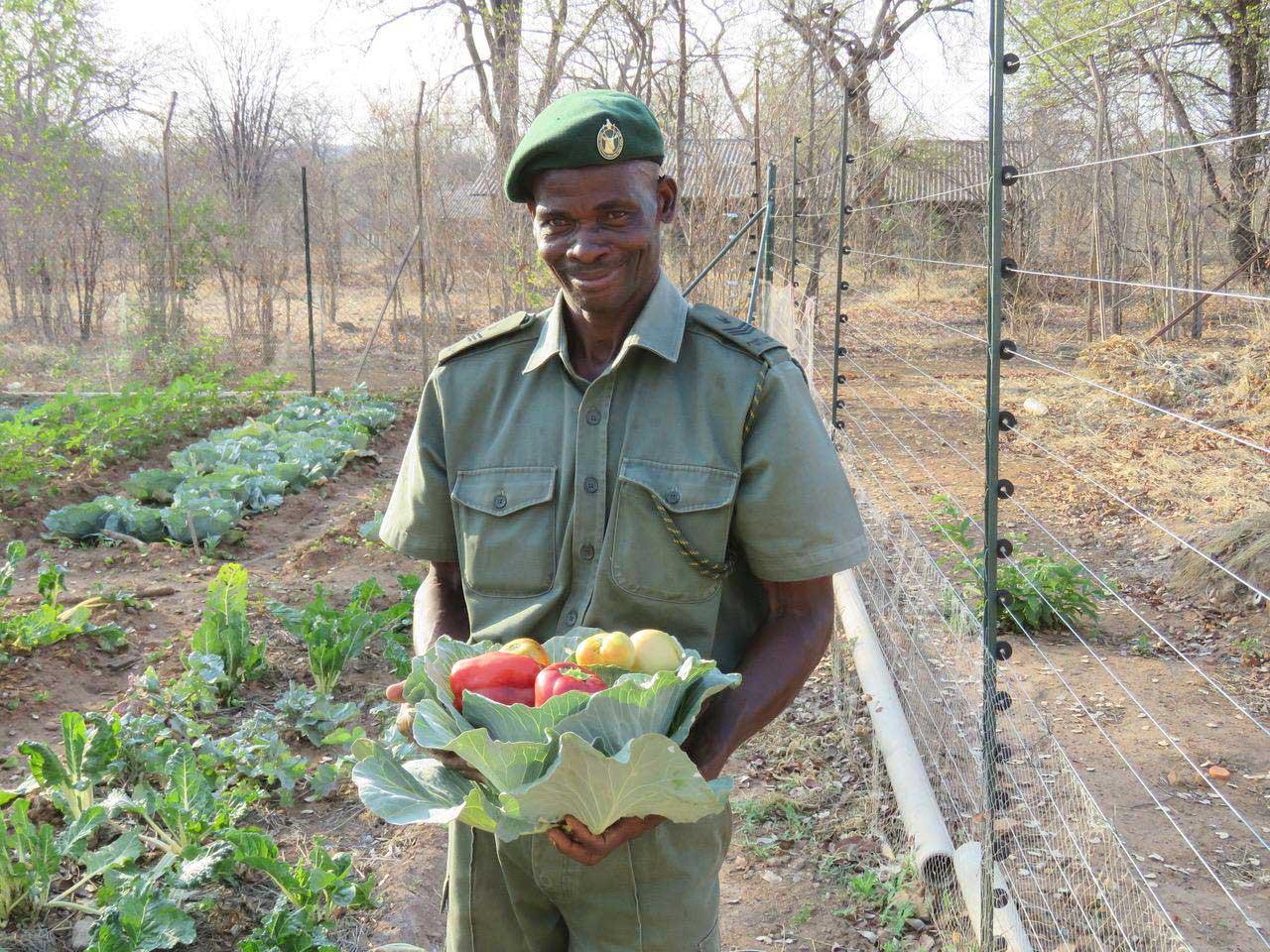 Food Security Ranger Vegetable Gardens